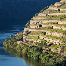 Porto Douro Vineyards